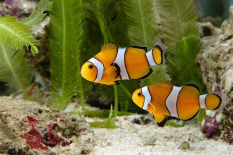 handle  saltwater aquarium