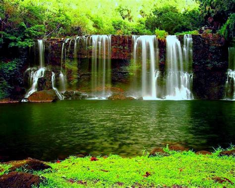 waterfall   thick green forest river pond weed hd wallpapers  desktop