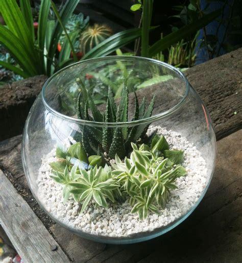 Jual Hidrogel Di Bandung souvenir tanaman souvenir tanaman kaktus dan sukulen