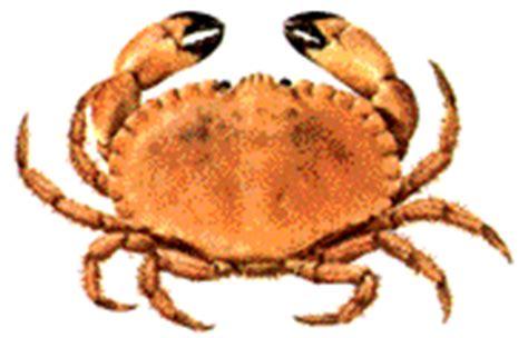 cuisson crabe dormeur crustaces