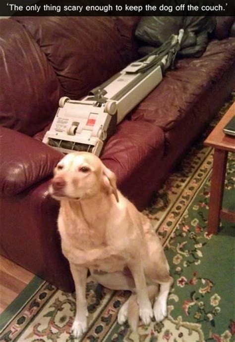 how to keep dog off couch when not home the only way to keep the dog off the couch pictures