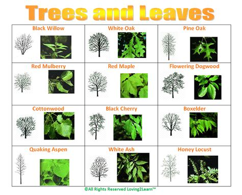 tree charts challenges charts science charts trees and leaves