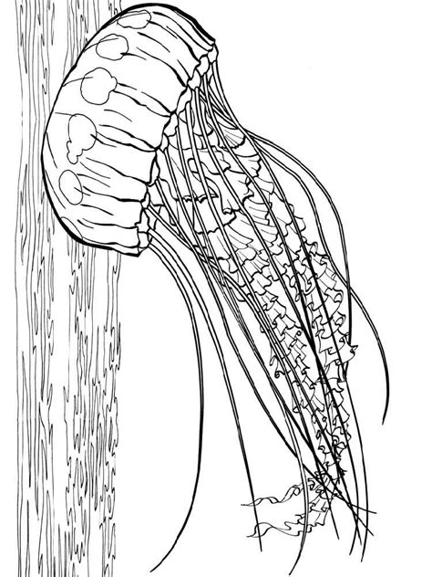 box jellyfish coloring pages labelled jellyfish coloring page jellyfish coloring