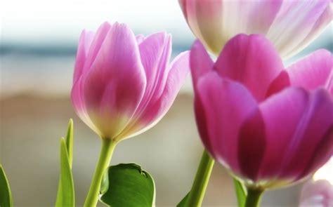 sognare fiori significato sognare i fiori interpretazione numeri sognipedia it