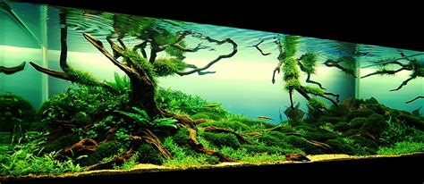 aquarium aquascapes bubbles aquarium aquascapes 2009 aquascaping gallery http bubblesaquarium com