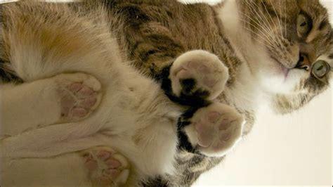 Cat Glass Table ガラスの上に乗ったネコ達の不思議な動物っぷりがよくわかるコンピレーション動画 Dna