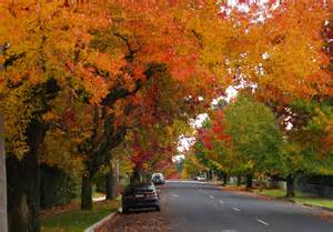 where can you see autumn trees in nsw sydney