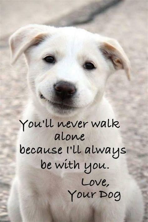 quotes about puppies 25 best quotes about dogs on puppy quotes lover quotes and quotes