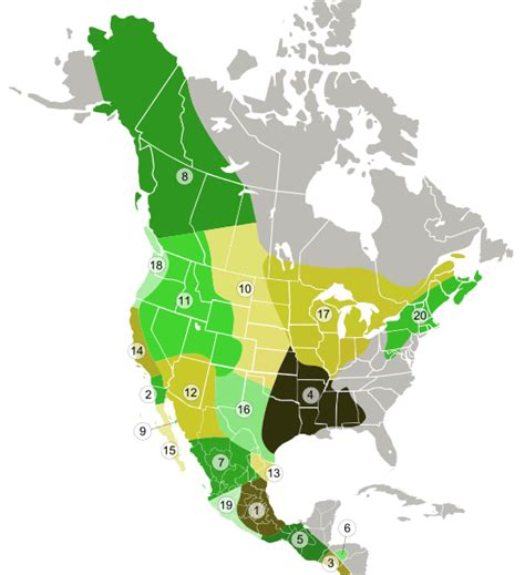 File:Coyote subspecies distribution map.svg   Wikipedia
