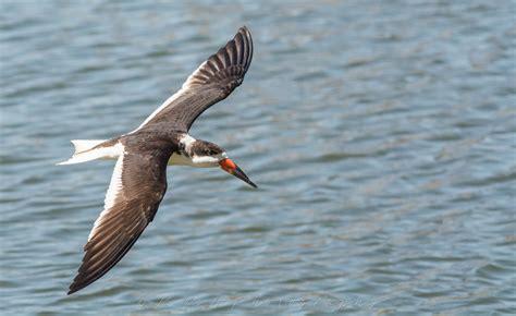 florida 52 bird species in 10 days d