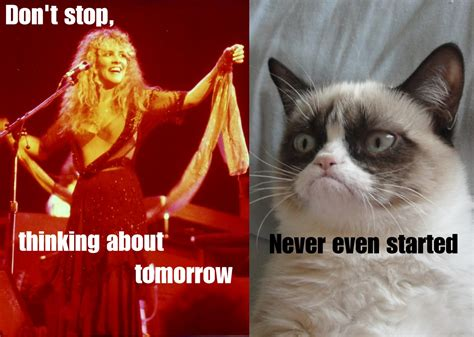 Original Grumpy Cat Meme - grumpy cat meets fleetwood mac grumpy cat know your meme