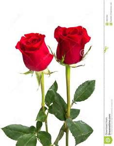 Sand Ceremony Vase Two Beautiful Red Roses On Isolating Background Stock