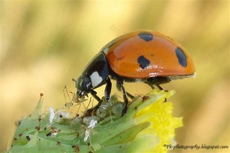 do ants eat aphids nature cultural and travel photography 4 1 13 5 1 13