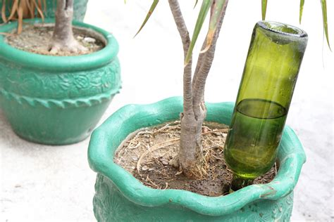 diy plant watering bottle how to make wine bottle plant waterer wikihow