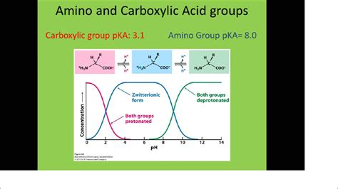 Do You Need Amino Acids To Detox Your by How Do You Determine The Net Charge Of An Amino Acid