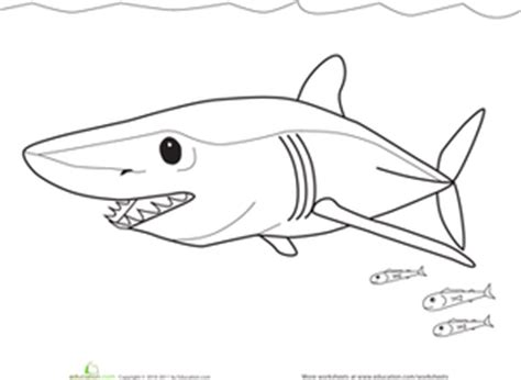 mako templates mako shark pages coloring pages