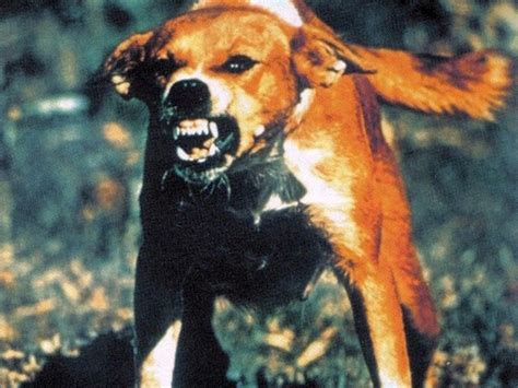 Mad Dogs The New Rabies Plague zombies for real