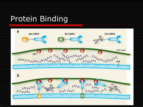 protein l binding ppt physicochemical properties of drugs in relation to