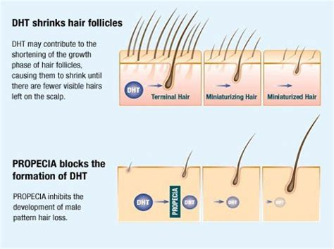 finasteride dosage uses side effects for hair loss finasteride fintex proscar propecia