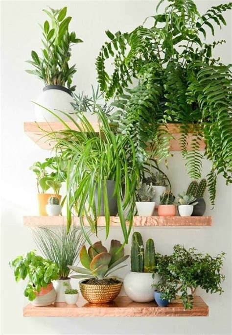 indoor decorative trees for the home 25 best ideas about small indoor plants on pinterest