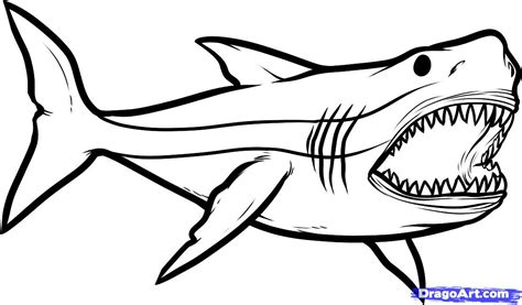 big shark coloring page shark and cat coloring pages good coloring pages