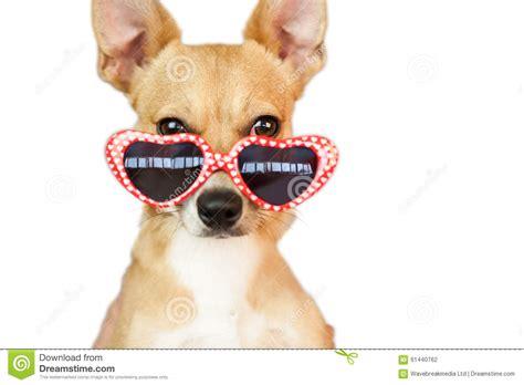 puppies with hearts with sunglasses stock photo image 61440762