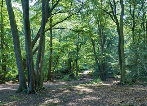the wood for the trees one s view of nature books forestry in the united kingdom