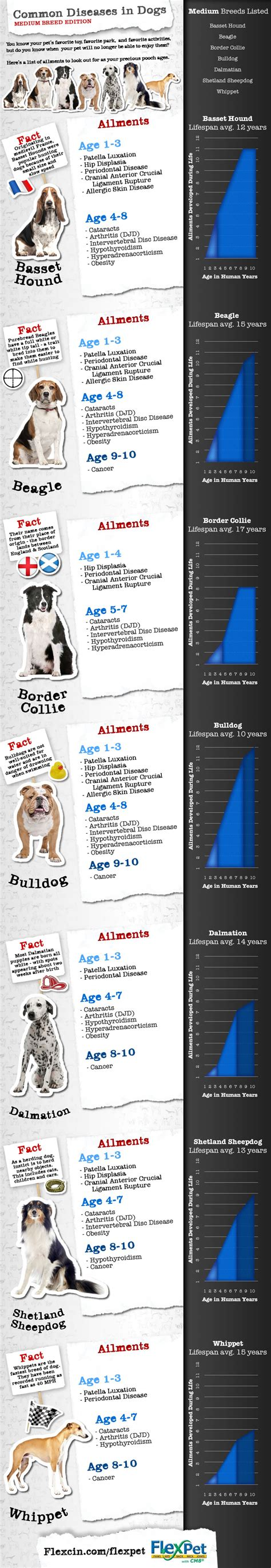 common diseases 14 best health safety infographics made