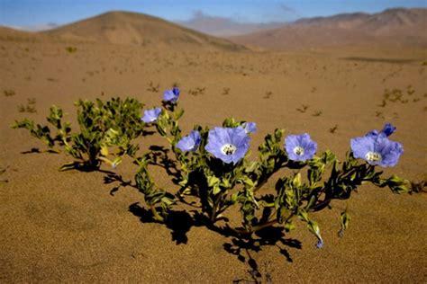 fiori deserto who we are