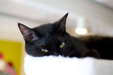 how to find a black cat in a room the psychology of intuition influence decision and trust books don t be spooked this national black cat day pawpost