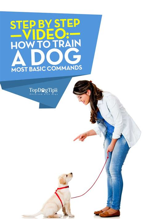 how to a basic commands how to a basic commands a step by step guide top tips