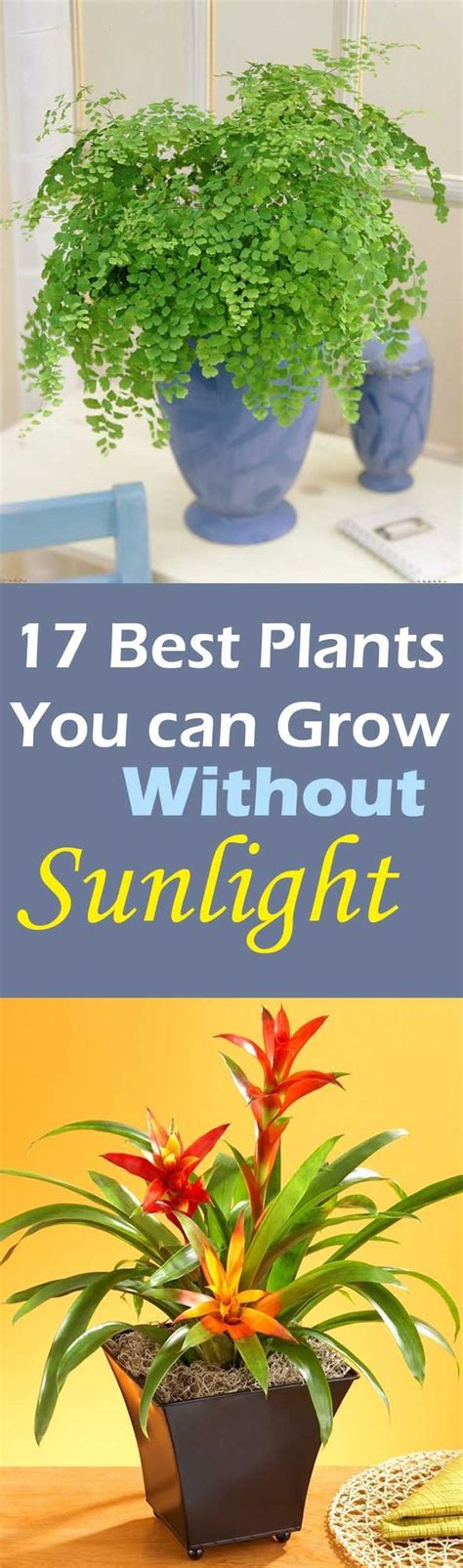 plants that don t need sunlight to grow 25 best ideas about low light houseplants on pinterest