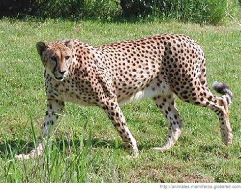 imagenes de animales terestres mamiferos terrestres auto design tech