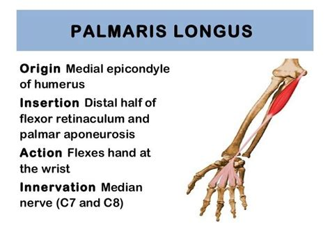 anatomy of a song the history of 45 iconic hits that changed rock r b and pop books palmaris longus origin and search