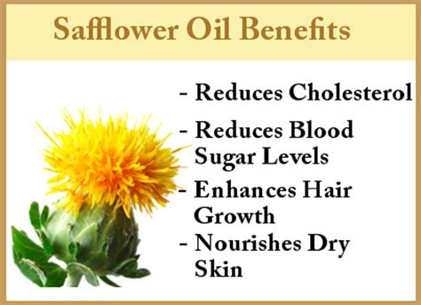 Shelf Of Safflower by Safflower Benefits That Are To Pass Up