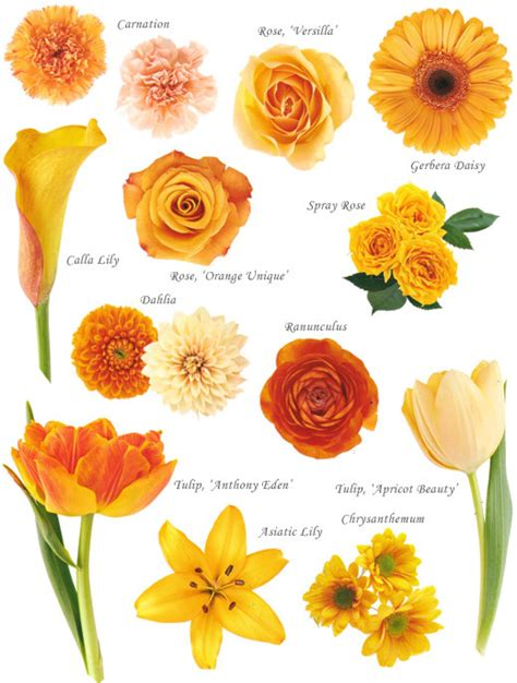 orange colors names flower names by color hayley s wedding tips 101