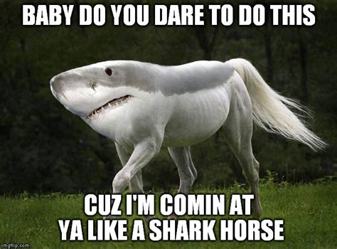 baby shark meme shark horse imgflip