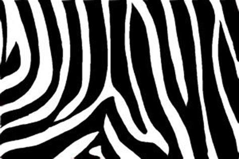 zebra pattern how to draw how to draw zebra print drawingnow