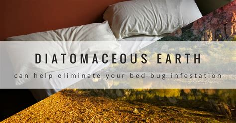 diatomaceous earth  kill bed bugs bedbug store