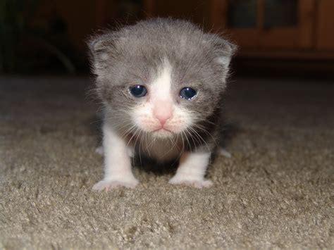 50 Animal Babies Photo Compilation