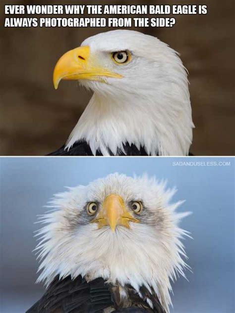 Bald Eagle Meme - dopl3r com memes ever wonder why the american bald