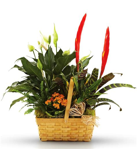 plants blooming blooming and green plants in a basket avas flowers