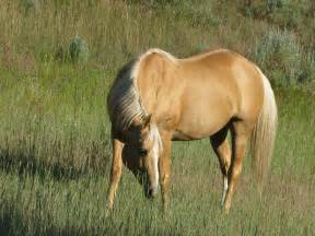 palomino color horses of the twilight plains woods and moonsun