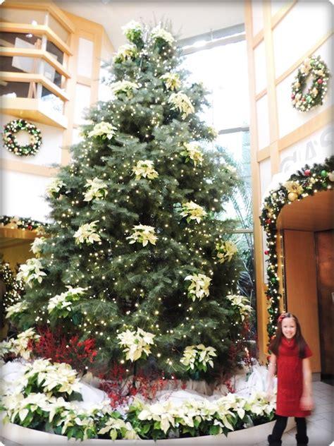 krismas tree to botni name cleveland botanical garden glow review