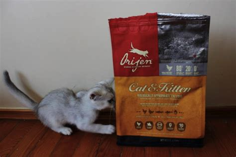 orijen food reviews orijen kitten food review cats kittens