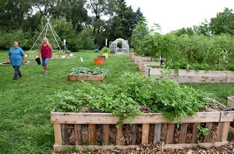 Algonquin Food Pantry by Lake In The Children S Garden Provides Produce For Needy