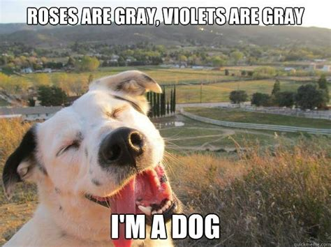 Silly Animal Memes - most funny animal memes and humor pics quotes and humor
