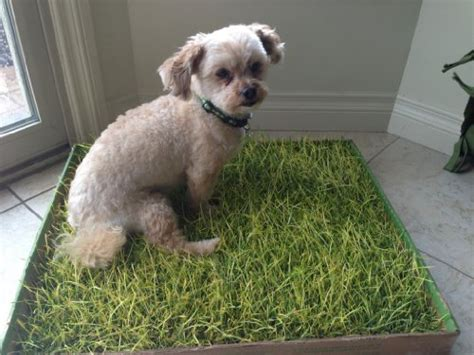 real grass potty doggielawn disposable potty real grass large 24x21 inches desertcart
