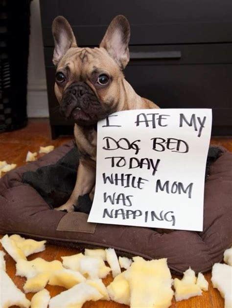 dog kennel flooring ideas  pinterest outdoor