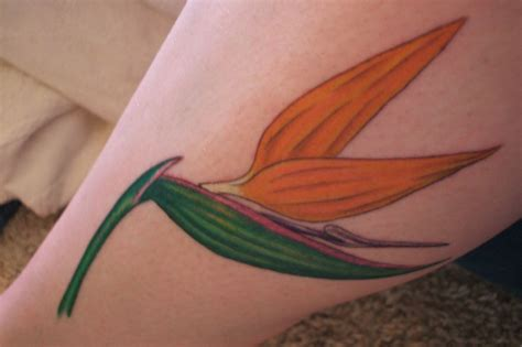 bird of paradise flower tattoo designs bird of paradise flower the shop